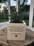 Personalised Shabby Chic Plant Pot AUNTIE gift AUNTY GREAT AUNT OR ANY NAME - 254324834416